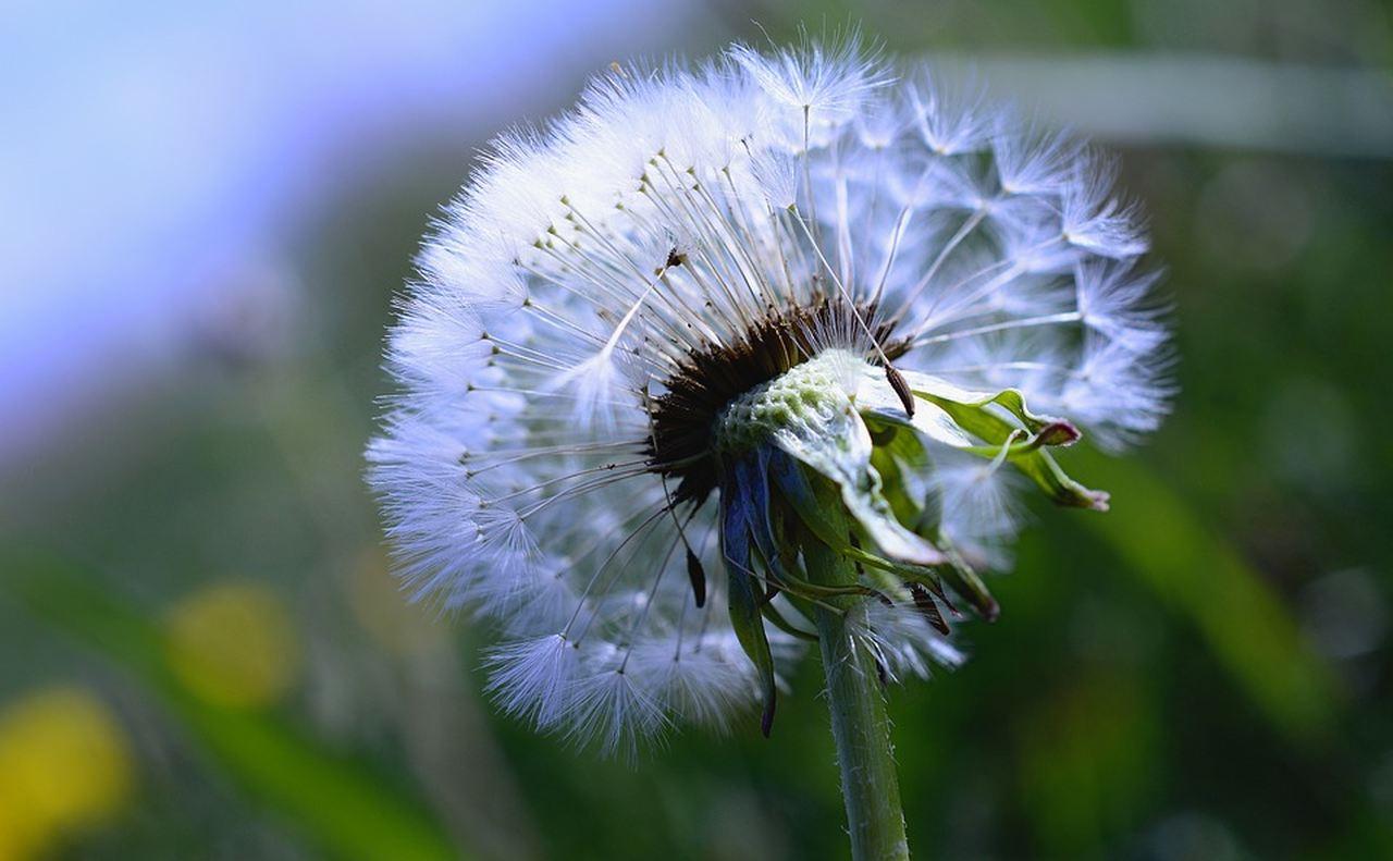 Alergia-choroba XXI wieku