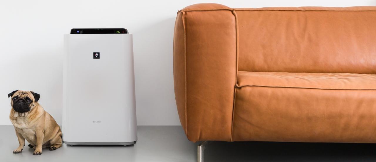 Oczyszczacz powietrza do salonu - Sharp KC-D50EUW
