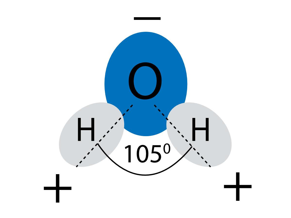 Budowa cząsteczki wody. Ile wody pić? Rola wody w organizmie
